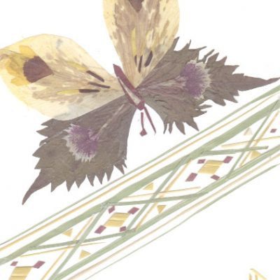 butterfly2 1