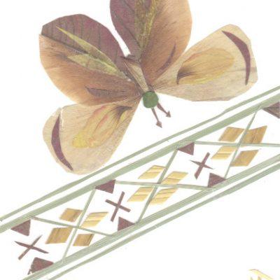 butterfly3 1
