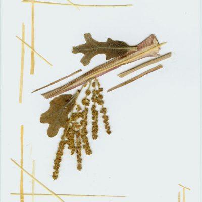 card 2005 3
