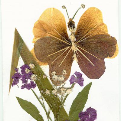 card 2005 5