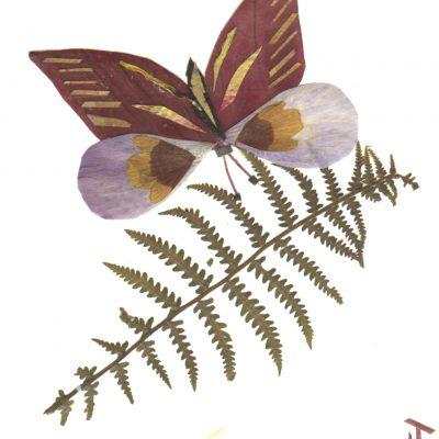 card_butterfly1