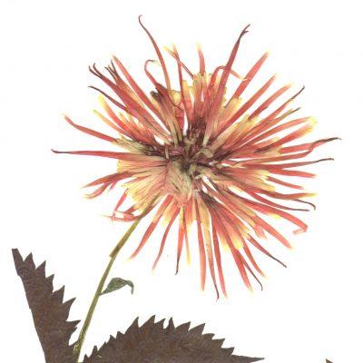 card_flower1