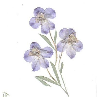 card_flower2