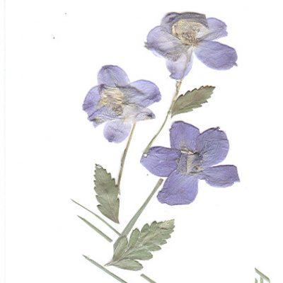 cardflower2