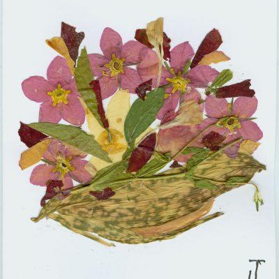 multi flower 2 1