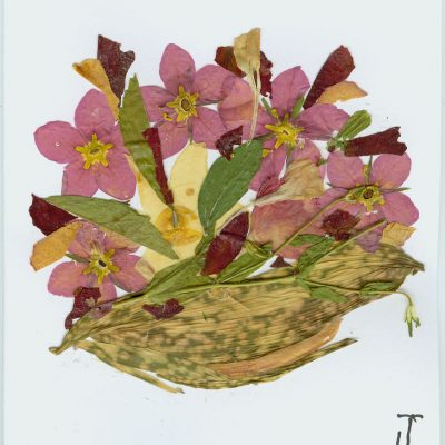 multi flower 2