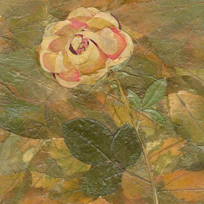 rose 11 30 05